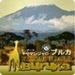 タンザニア キリマンジャロ ブルカ