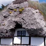 Seegrasdach (Tangtaget) auf Laesoe DK