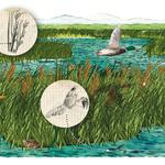 NATURALES /// Ilustración de Julio Antonio Blasco, Sr. López, editado por Edelvives, 2014.  Ilustraciones realizadas para libro de ciencias naturales.