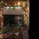 Weihnachtlich dekorierter Pflanzen-Happy Place