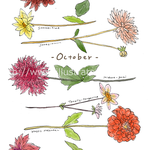 秋のリコールカード ダリアのイラスト-インク、photoshop