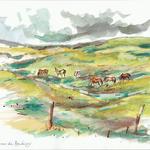 Chevaux, Dunes de Baubigny-15x21cm-40€-n°21205