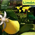 Limón. Propiedades y usos
