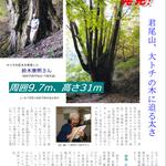 P2 カツラの巨木