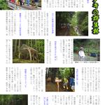 P4 トチノキの群生林