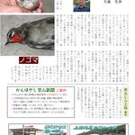 上林の鳥たち「ノゴマ」