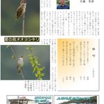 P11. 上林の鳥たち。オオヨシキリ
