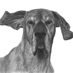In liefdevolle herinnering aan Tula de Duitse Dog