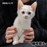 2020.01.11 藤枝蘭丸