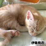 2020.01.13 伊集院忍