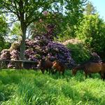 Forst Rosengarten