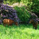 Auf den Weiden im Forst Rosengarten können die Jährlinge im Sommer ihr Leben genießen.