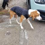 der Hundemantel soll Elli vor Kälte und Regen in ihrer Hütte an der Straße schützen
