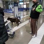 Panagiotis mit seiner Hündin vor dem letzten VET Check am Flughafen