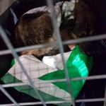 Abflug in Tessaloniki Glyka´s Box wird nochmals gesäubert und sie bekomt frische Decken und UNterlagen für den Flug
