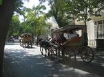 Schattige Strassen auf Büyükada (Prinzeninseln)
