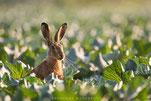 Nordhessische Naturfototage HNA-Fotowettbewerb 2016