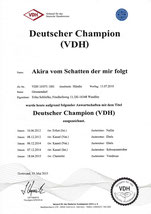 Akiras Champion Urkunde