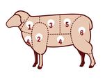 Fleischkunde Lamm