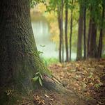 Jeu en bois les essences d'arbre de la forêt