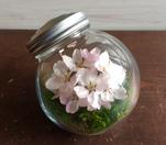 キャンディボトル 桜/ 101×90 ¥3500