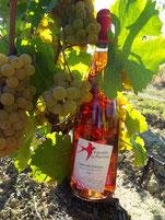 Bouteille de Cabernet de Loire dans les vignes