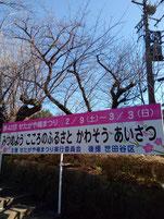 羽根木公園20190201