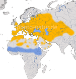 Karte zur Verbreitung der Turteltaube (Streptopelia turtur)