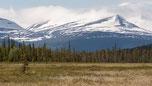 Pärlälven Naturreservat