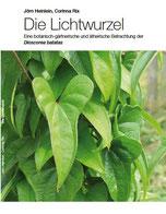 Lichtwurzel, Dioscorea batatas