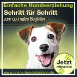 ERZIEHUNG – Spielerisch lernen wo immer Du bist - Dein Hund wird's lieben!