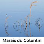 Marais Cotentin, Urlaub mit Hund, Normandie