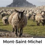 Mont-Saint-Michel, Normandie, Urlaub mit Hund