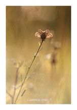 MG8834 • En fleur •