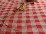 Un petit marsien vert