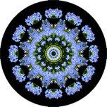 Mandala aus Vergissmeinnicht mit schwarzem Hintergrund, Vergissmeinnichtmandala