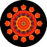 Mandala aus einer orangen Mohnblume mit schwarzem Hintergrund, Mohnblumenmandala