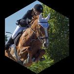 Pferde;Springreiten;Gossau:Hüntwangen