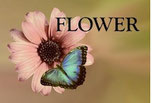 Flower,FlowerColor,花,花屋,京都花屋
