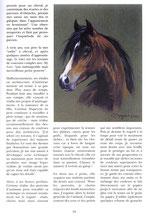 3/4 Equus - Les Chevaux n°62 –  Août / Sept./ Oct. 2005