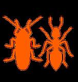 eliminación de hormigas y cucarachas en el hogar