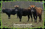 Mein BioRind | Auerochsen-Züchter