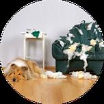 Hunde Problemtherapie