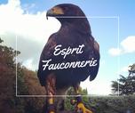 Esprit Fauconnerie - Spectacles de fauconnerie itinérants