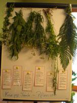 Pflanzensignaturen