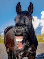 Pferd lacht (Foto: Pixabay)