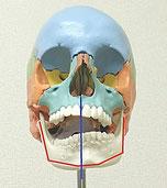 あごのズレ、顎関節症から全身に起こりうる不快症状