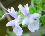 ROMARIN Fleurs