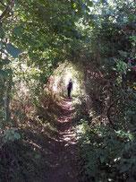 Weg vom Campingplatz nach Glastonbury
