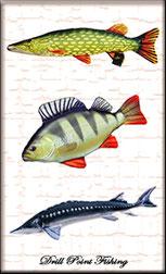 Drill Point Fishing Onlineshop, Unterkategorie, Accessoires, Stofftiere - Fisch Plüschtier